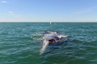 Baleines02