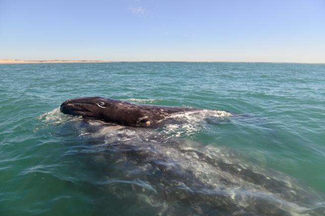 Baleines03