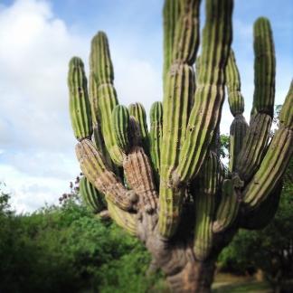 cactus01