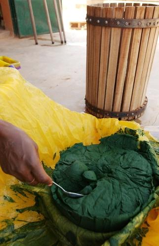 Un passage dans la presse permet d'obtenir le premier etat consommable de l'algue, delaistee de son eau, fraiche et non sechee. Ouahigouya, BURKINA FASO - 06/12/2005